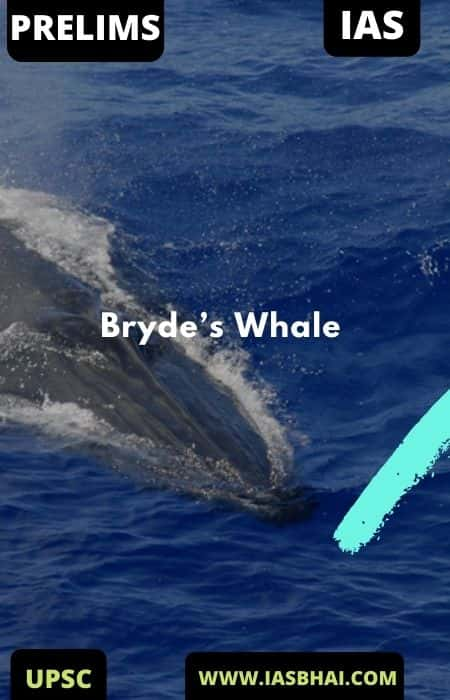 Bryde's Whale | UPSC