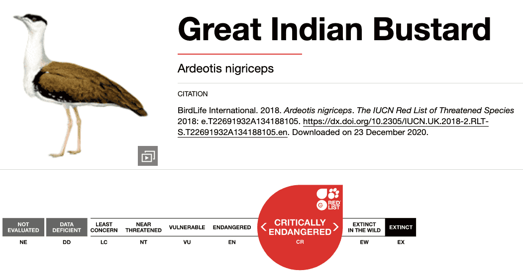 Great Indian Bustards IUCN