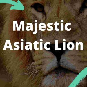 Majestic Asiatic Lion UPSC