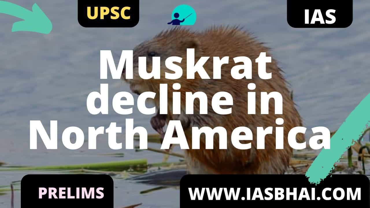 Muskrat decline in North America UPSC