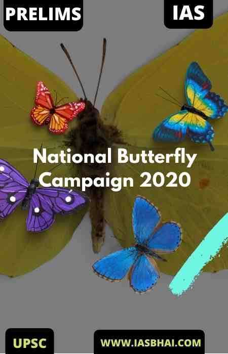 National Butterfly Campaign 2020
