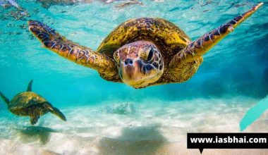 National Marine Turtle Action Plan