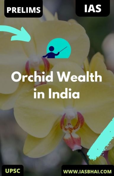 Orchid Wealth in India