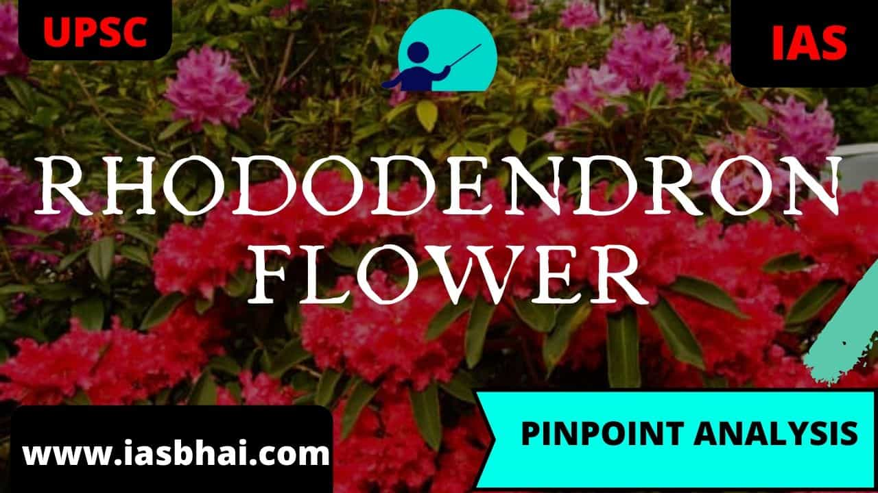 Rhododendron flower upsc