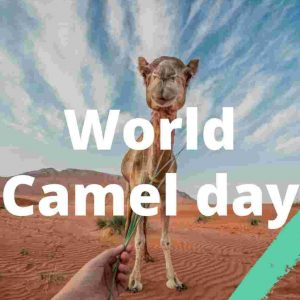 World camel day 2020
